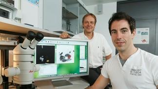 Nouvelle méthode permettant d'analyser des centaines d'images de cellules en seulement quelques clics