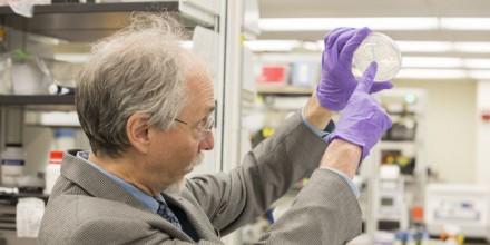 « Sc2.0 », la première levure dotée d'un chromosome artificiel