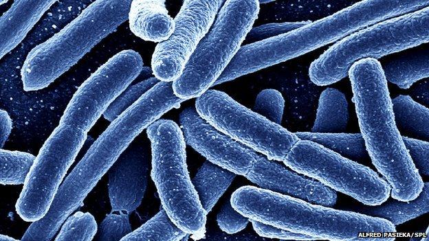 Des bactéries dans nos intestins sont millénaires