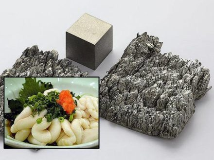 Recovery and separation of rare earth elements using salmon milt