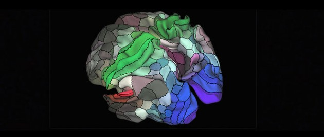 The Map of the Human Brain Is Finally Getting More Useful