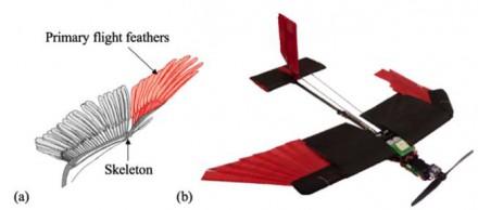 Copier les ailes des oiseaux pour rendre les drones plus agiles