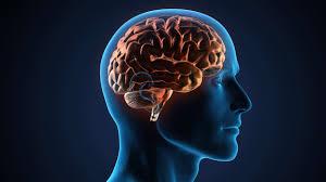 Le Human Brain Project (HBP) a soufflé sa cinquième bougie