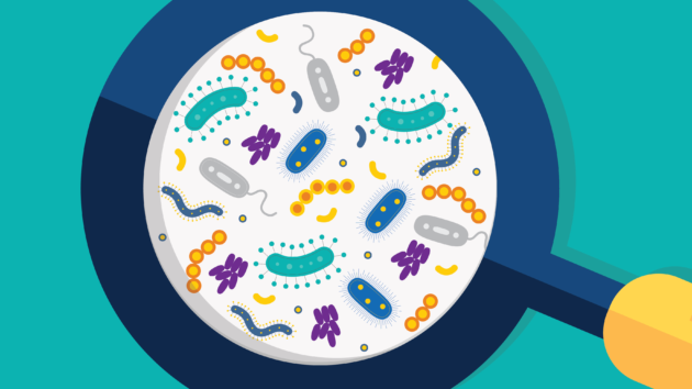 Microbiome: un projet du FNS ouvre des pistes sur le traitement de l'obésité
