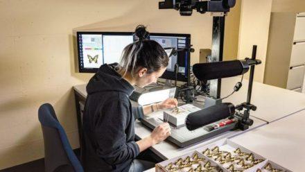 12 millions pour numériser les collections de sciences naturelles suisses